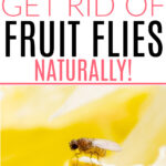 getting rid of fruit flies naturally