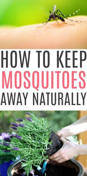 keep mosquitoes away naturally