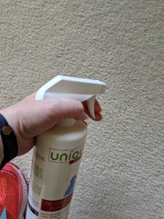 spraying carpet with spray to get rid of urine stain