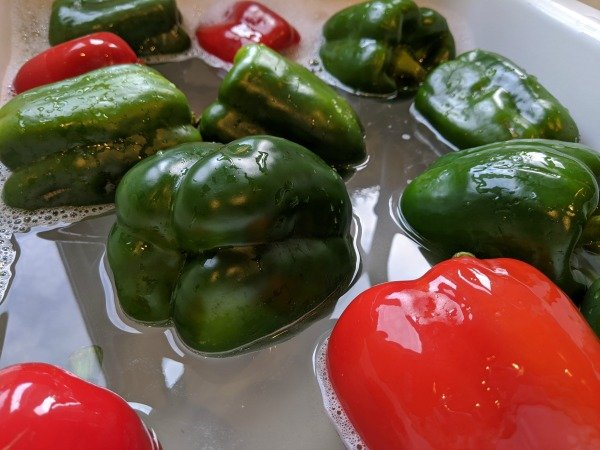 cleaning peppers in bleach solution